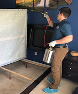 Bed bug chemical treatment in Phoenix