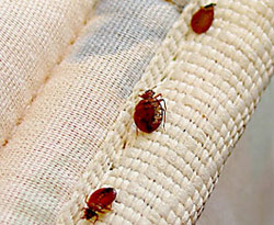 Phoenix Bed Bug Treatment