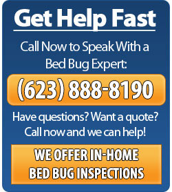 Call Phoenix Bed Bug Expert - 623-552-4815